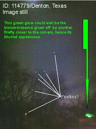 denton fireflies 1